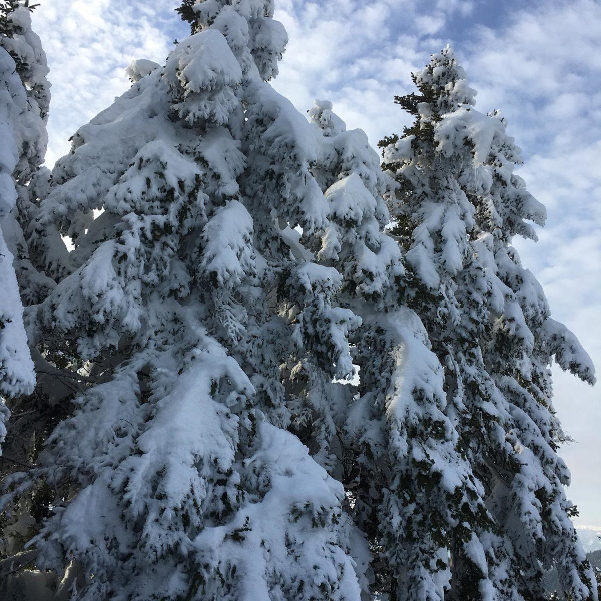 Διχώρι - Χιονισμένη φύση
